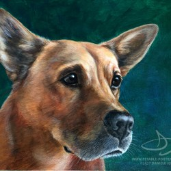 Short Haired Chow Dog Portrait Painting