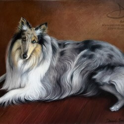 Collie Dog Drawing Portrait