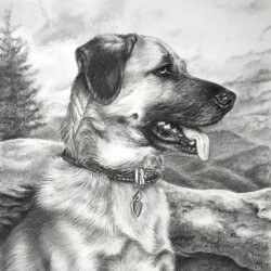 Dog Drawing in Charcoal