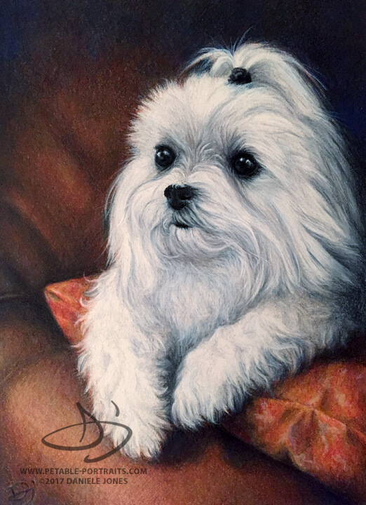 Dog Drawing of a Maltese