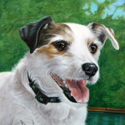 Jack Russell Dog Portrait in Pencil