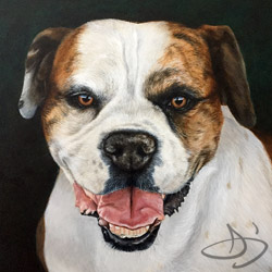 American Bulldog Portrait Painting. Brynn from Colorado