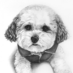 Dog drawing portrait