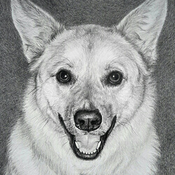 Baily Dog Drawing