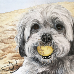 Beach Dog Portrait Drawing