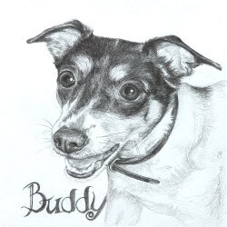 Rat Terrier Drawing in Pencil