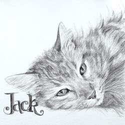 Cat Portrait in Pencil