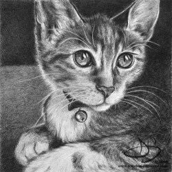 Kitten Drawing