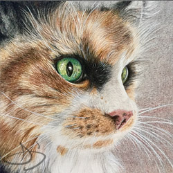 Cat art drawing of Princess