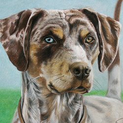 Louisianna Catahoula Leopard Dog Portraits