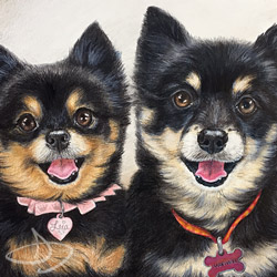 Chihuahua Dog Portrait Drawing from Columbia, Missouri
