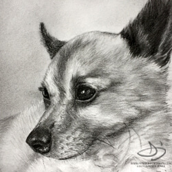 Chihuahua Drawing in Charcoal