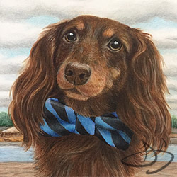 Dachshund Dog Drawing