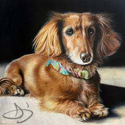 Dachshund - Winston -  dog portrait from Parkland, KS