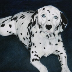 Dalmation Drawing in Colored Pencil