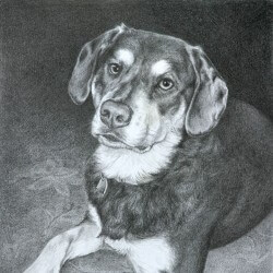 Dog Drawing in Pencil