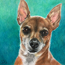 Chihuahua Dog Drawing