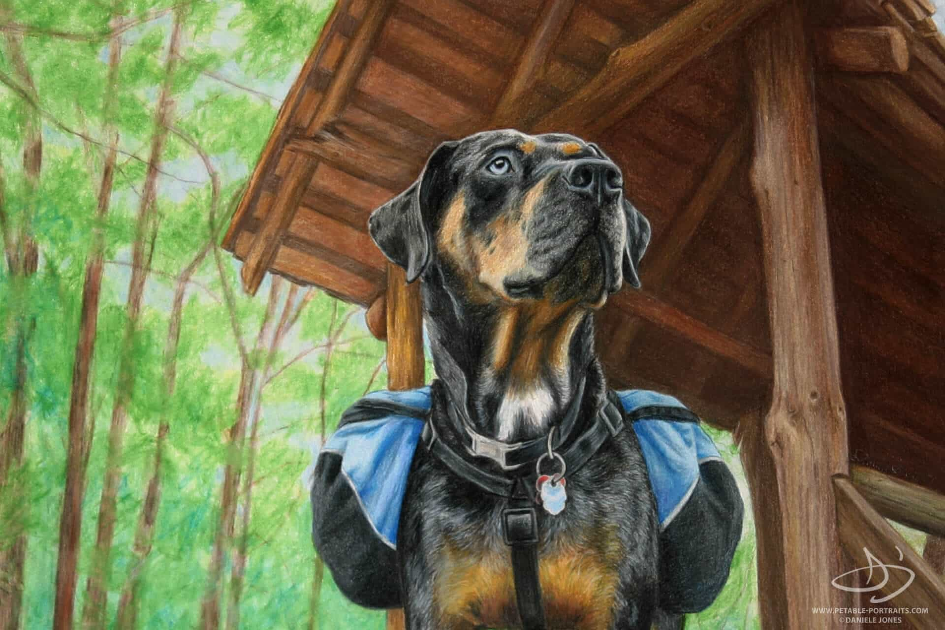 Dog Drawings in Colored Pencil