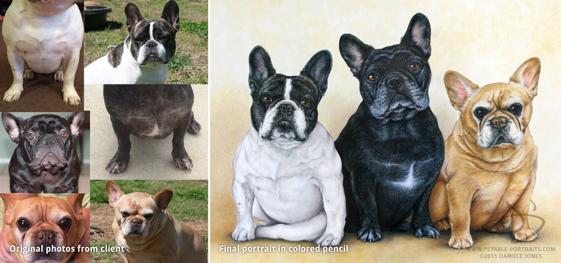 dog drawings of a French Bulldogs