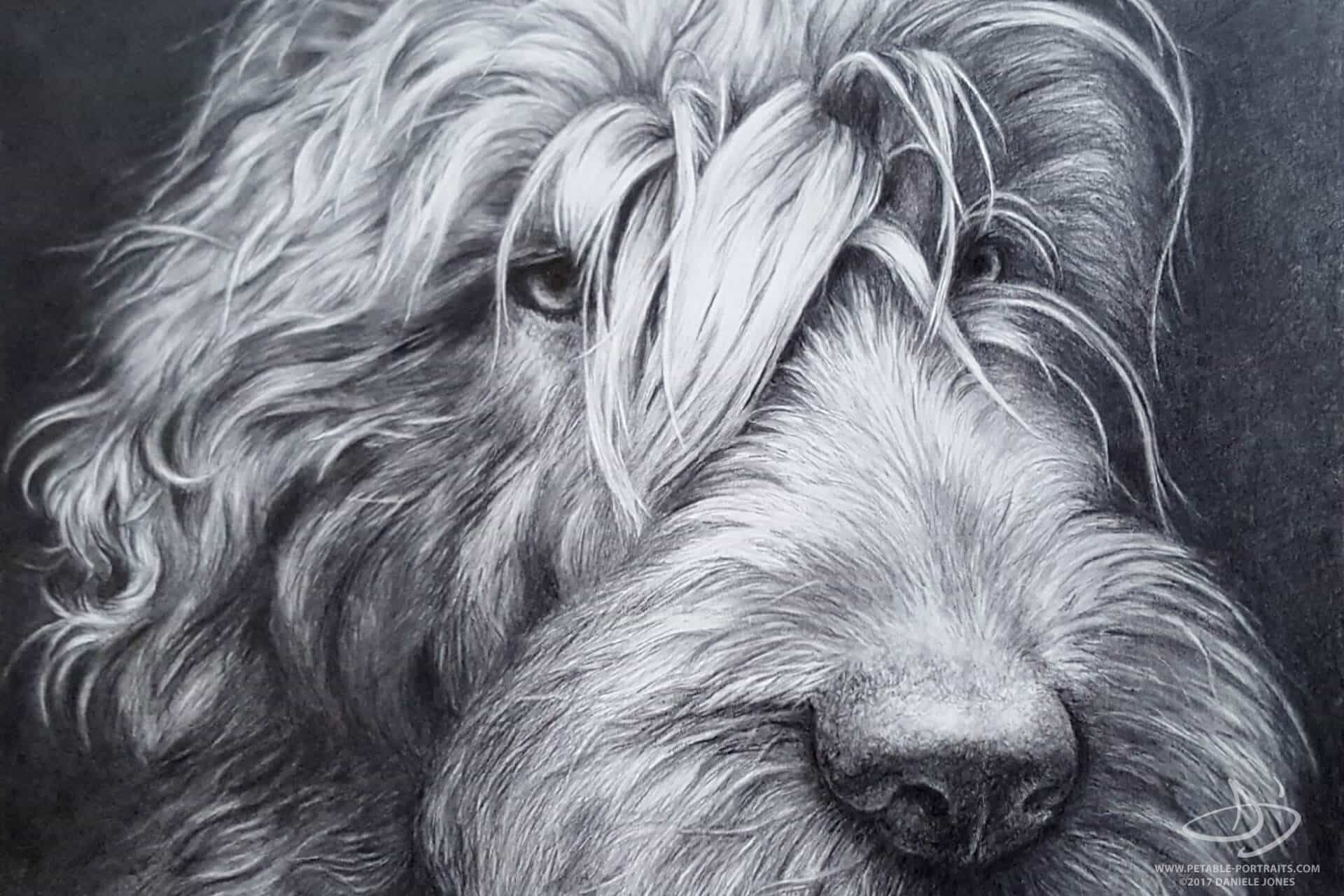 Dog Drawings in Pencil