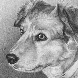 Dog Portrait in Pencil