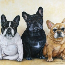 Dog Drawing of Frenchies