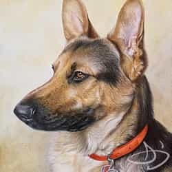 German Shepherd pet portrait - dog drawing