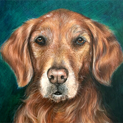 Golden Retriever Drawing in colored pencil