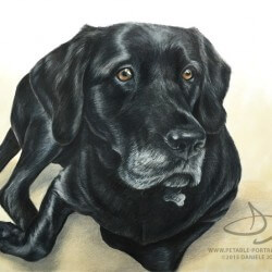 Black Dog Drawing Portrait