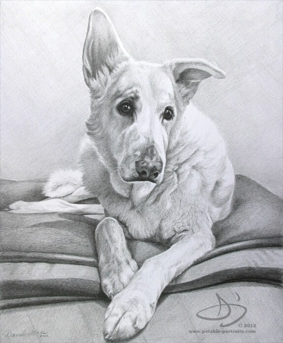 Portrait of an old dog