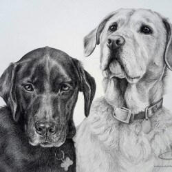 Labrador Retriever Drawings Tennessee