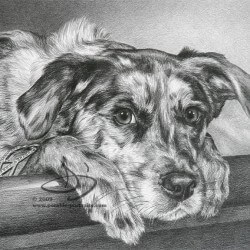 Beagle Dog Portrait in Pencil