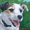 Jack Russell pet portrait