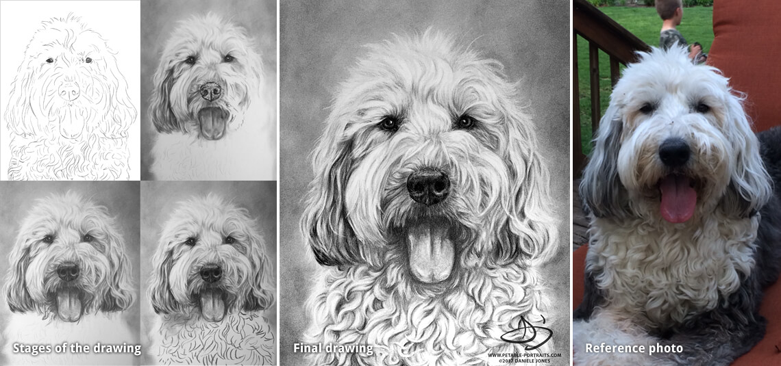 pet portrait drawing of a sheepdog