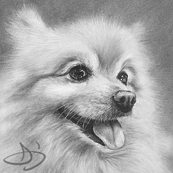 Pomeranian - Tigerman -  dog portrait from Pflugerville, TX