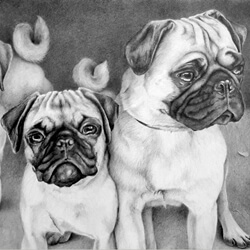 Pug Dog Drawing Portrait