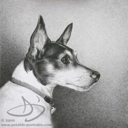 Rat Terrier Dog Drawing in Pencil