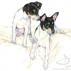 Rat Terrier Dog Drawing in Colored Pencil