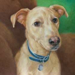 Red Heeler Dog Drawing in Colored Pencil