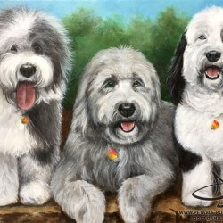Sheepdog Portrait Painting