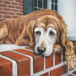 Retriever Dog Portrait in Pencil