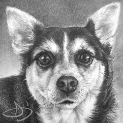 A terrier/beagle dog portrait from Kansas - Coach