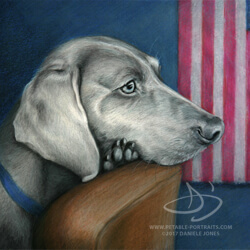 Weimaraner Dog Drawing in Colored Pencil