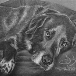 Black Dog Portrait in Charcoal