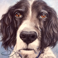 Zeke English Setter Drawing from Kansas